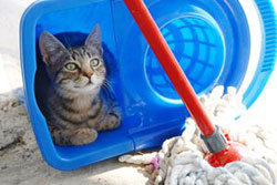 Cat in bucket as mop cleans mess, and is for you to buy pet supplies online or pet training from pet shop or pet store.