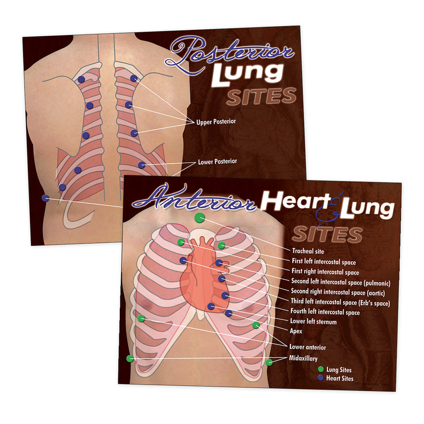 Nasco Heart & Lung Sites Visual Aids Poster Set