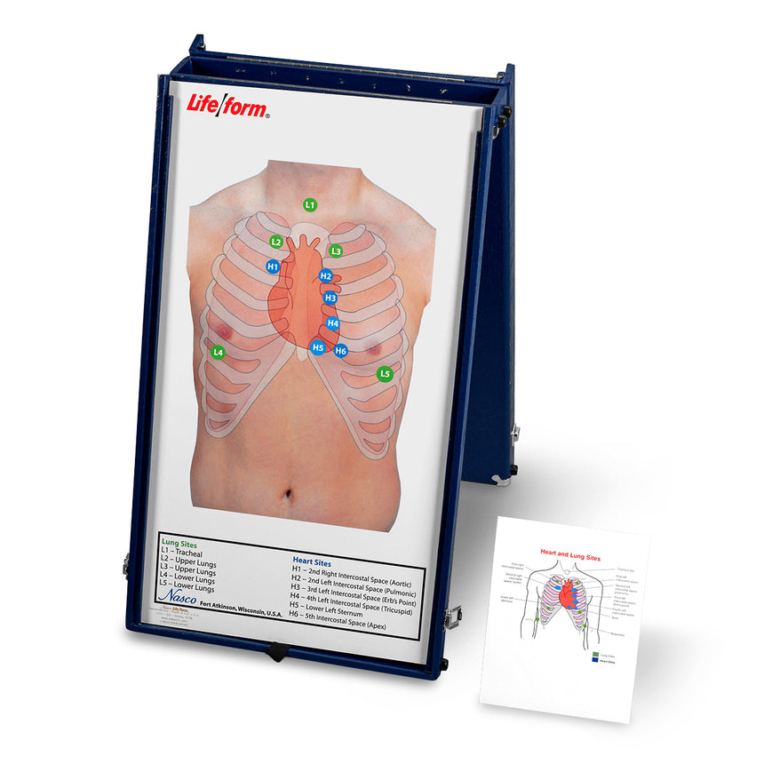 Life/form® Anterior Auscultation Practice Board with Case Only