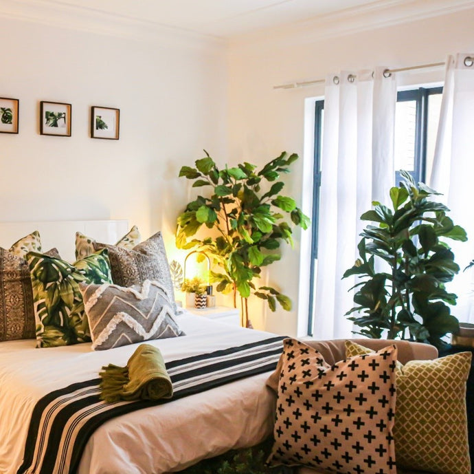 How houseplants can help you get a better night's sleep