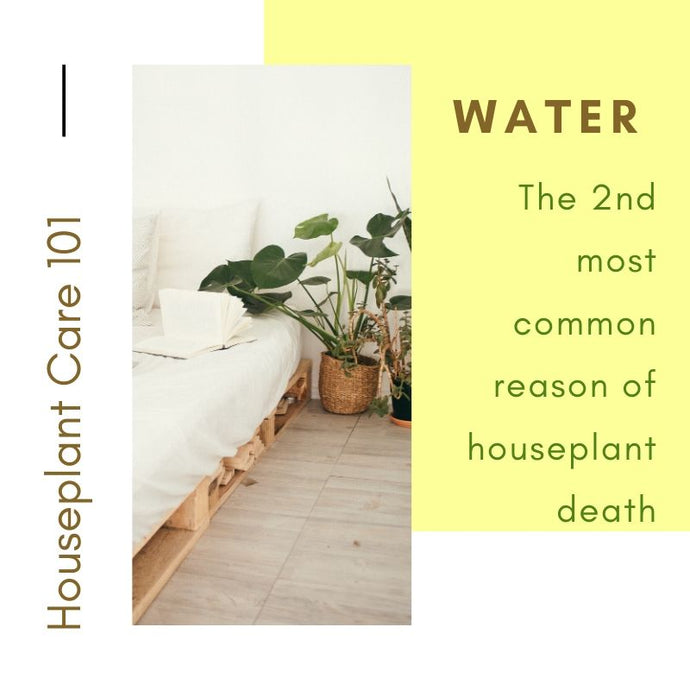 Houseplant Care 101 - Water