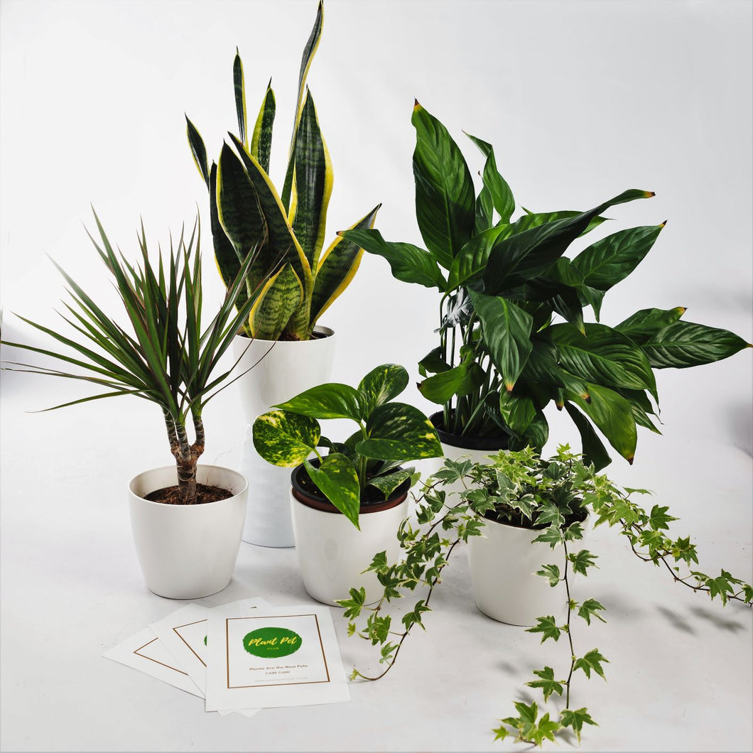 Air-Purifying Jungle Bundle