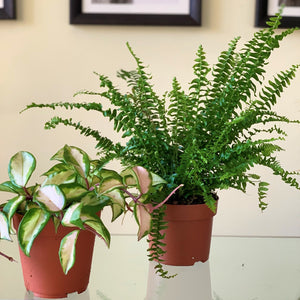 Pet-Friendly Plant Pets