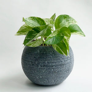 Dark Grey Boule Pot