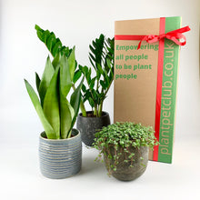 Load image into Gallery viewer, Plant Pet Subscription Offer - 12 Months