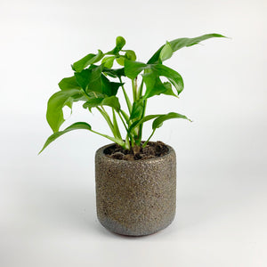 Plant Pet Subscription Offer - 3 Months