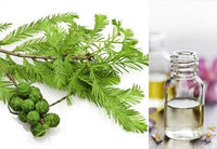 Cypress (Essential Oil)