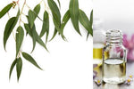 Eucalyptus (Essential Oil)
