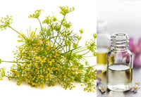 Fennel Sweet (Essential Oil)