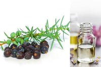 Juniper Berry (Essential Oil)
