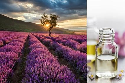 Lavender (Essential Oil)
