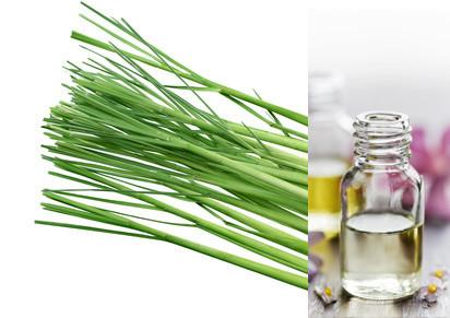 Lemongrass (Essential Oil)