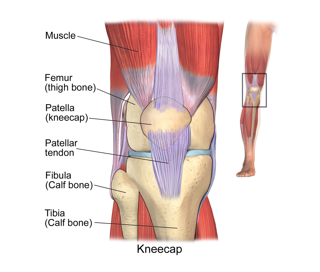 Patellar Tendinitis: How To Maximise Your Recovery