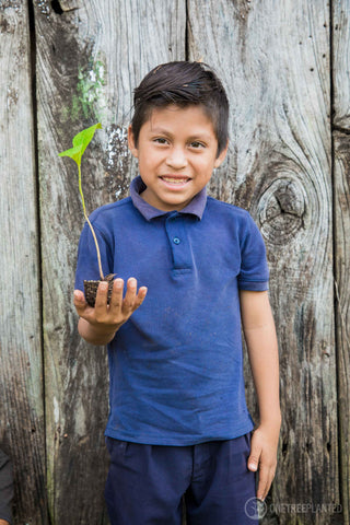 Reforestraion Program Noe Boutiques Help To Plant A Tree For Every Product You Buy