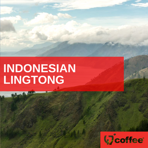 INDONESIAN - SUMATRA LINGTONG