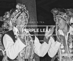 April: Purple Leaf Sheng