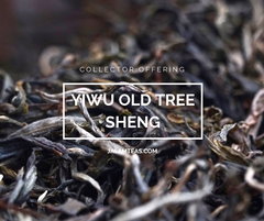 Collector Offering: Yiwu Old Tree Sheng