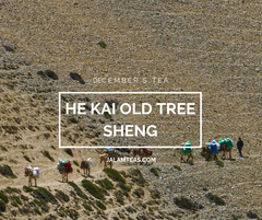 December: He Kai Old Tree Sheng