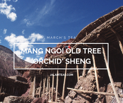 "March: Mang Ngoi ""Orchid"" Old Tree Sheng"
