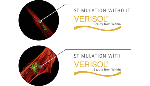 verisol collagen