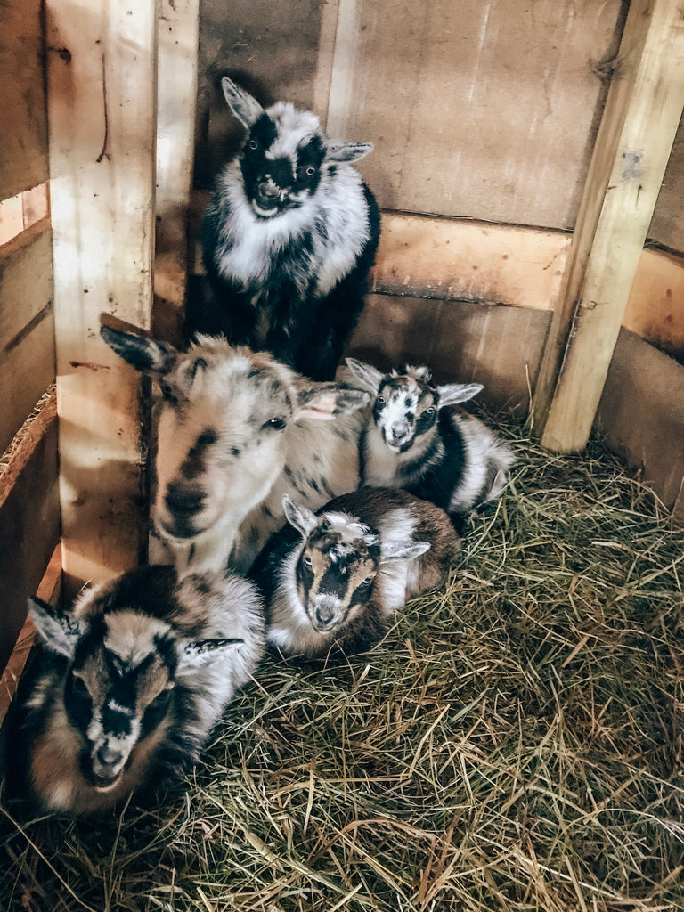 You've Goat To Be Kidding Me - Part 1: Kidding Kit Essentials