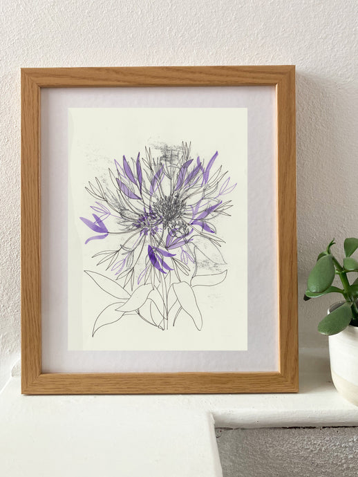 Cornflower Study with purple
