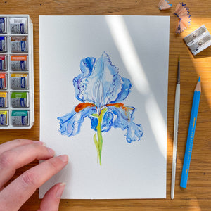 Iris No.1 - original painting