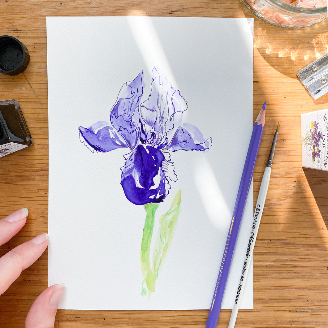 Iris No.4 - original painting