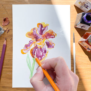 Iris No.8 - original painting