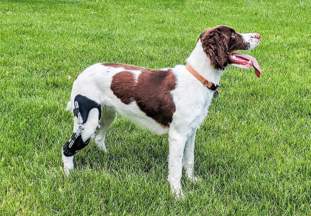 Performance Dog Stifle Knee Brace (Rear