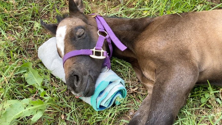 The Nut Farm Foal: A Survivor Story Part 1