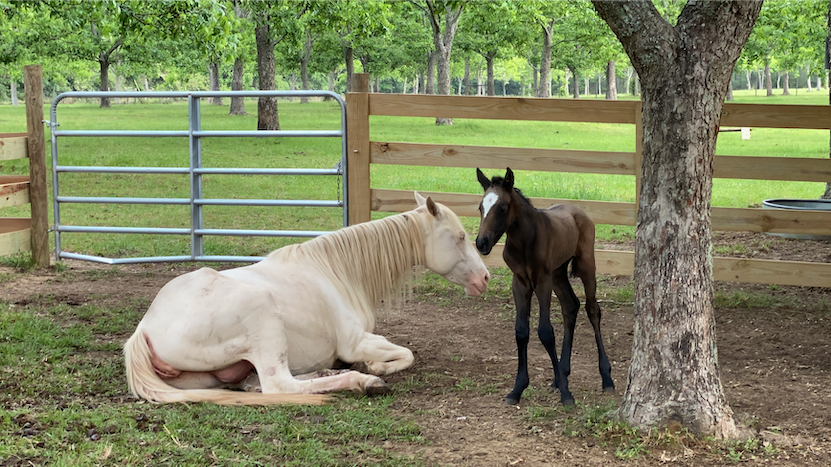 The Birth of Our Special Needs Foal