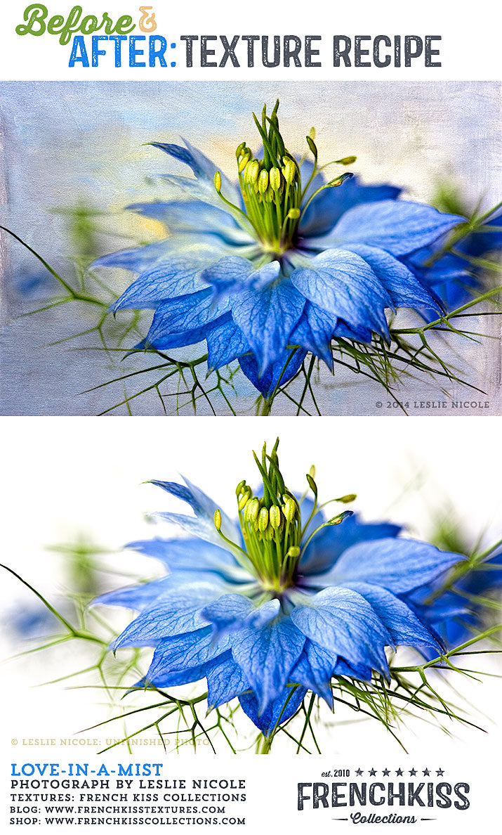 Before and after texture example using a Love-in-a-mist flower macro.