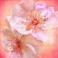 Rose photograph by Leslie Nicole with a texture and the Topaz Labs Impression filter.