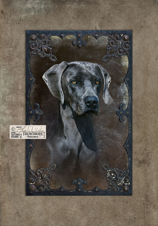 Blue Weimaraner portrait using textures and frame by Leslie Nicole.