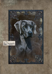 Photographic portrait with textures of a Blue Weimaraner.