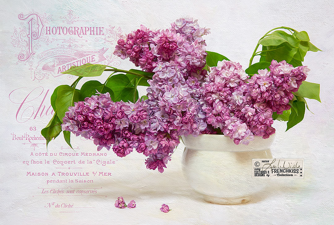 Lilac photograph by Leslie Nicole using French Kiss Collections texture and overlay.