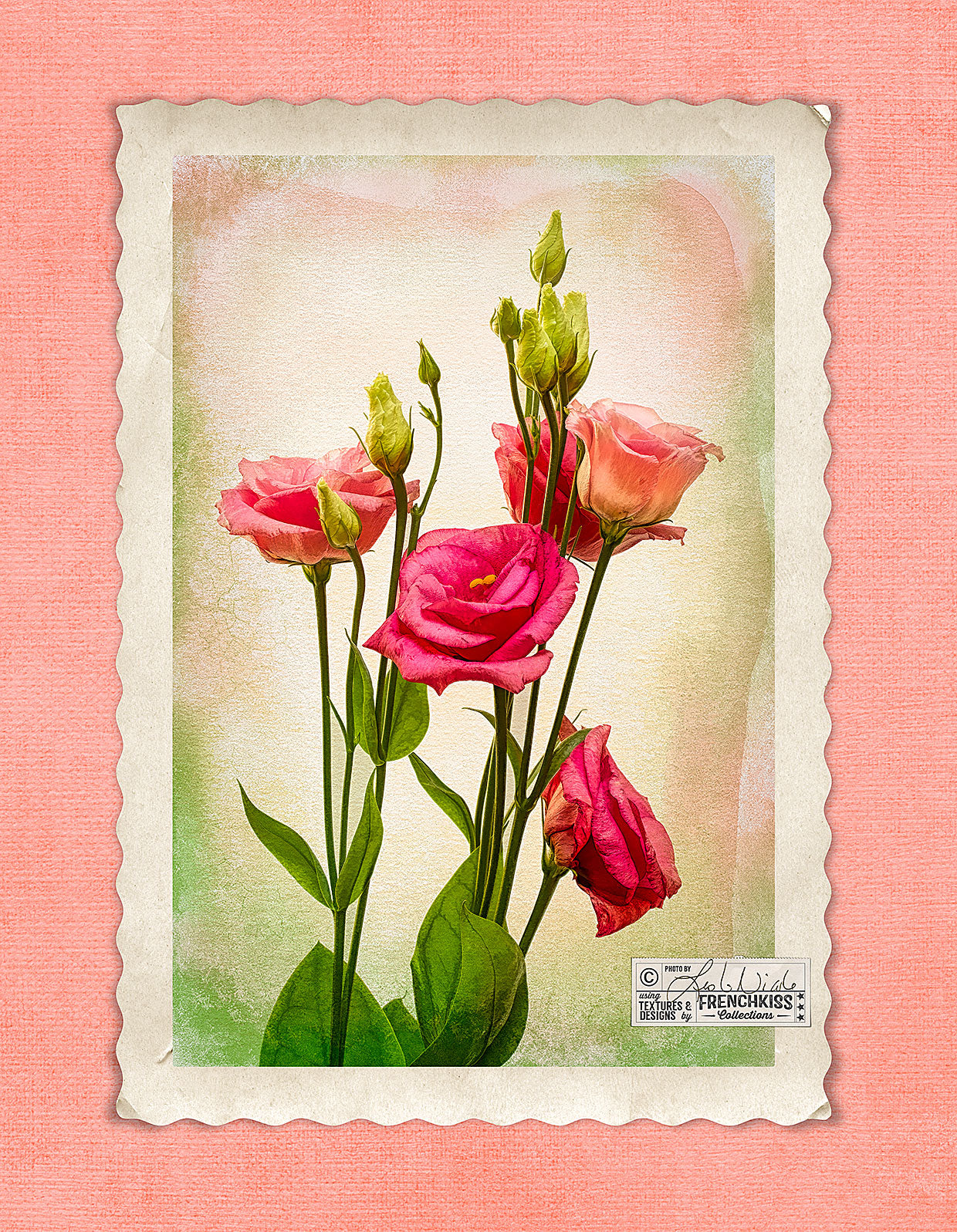 Lisianthus textured flower photograph with a digital vintage frame and texture background.