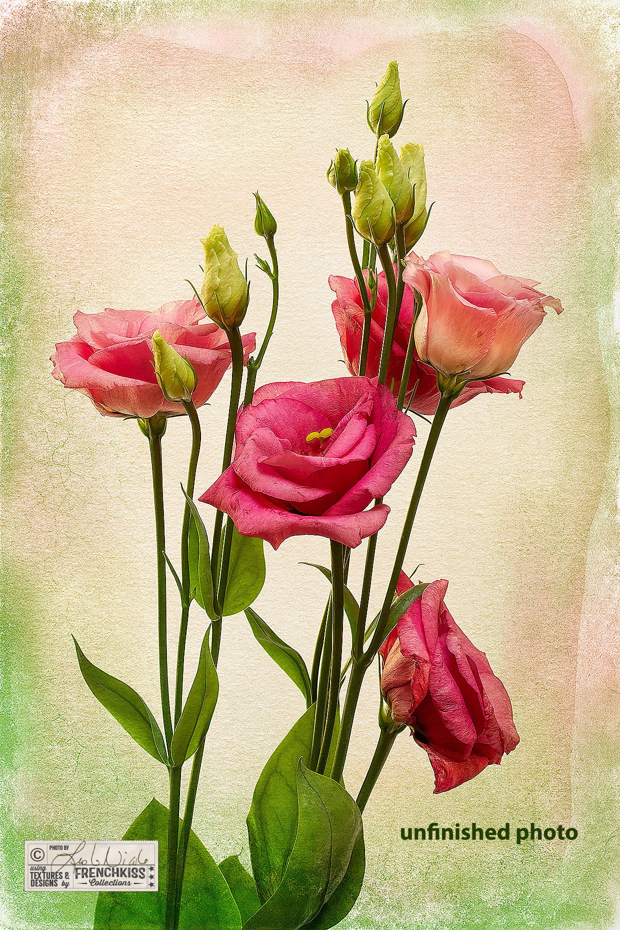 Round 1 edits for this Lisianthus flowers photograph with textures and filters.
