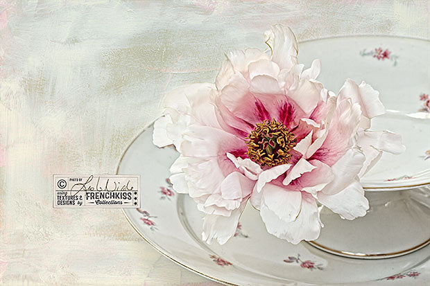 Tree peony photograph combined with a painterly texture by French Kiss Collections. Image by Leslie Nicole.