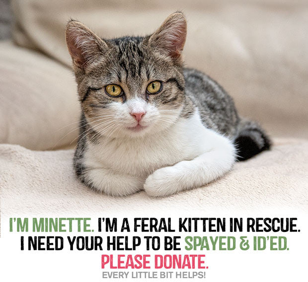 Minette, a kitten who needs to be spayed.