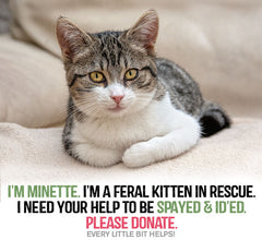Minette-needs to be spayed