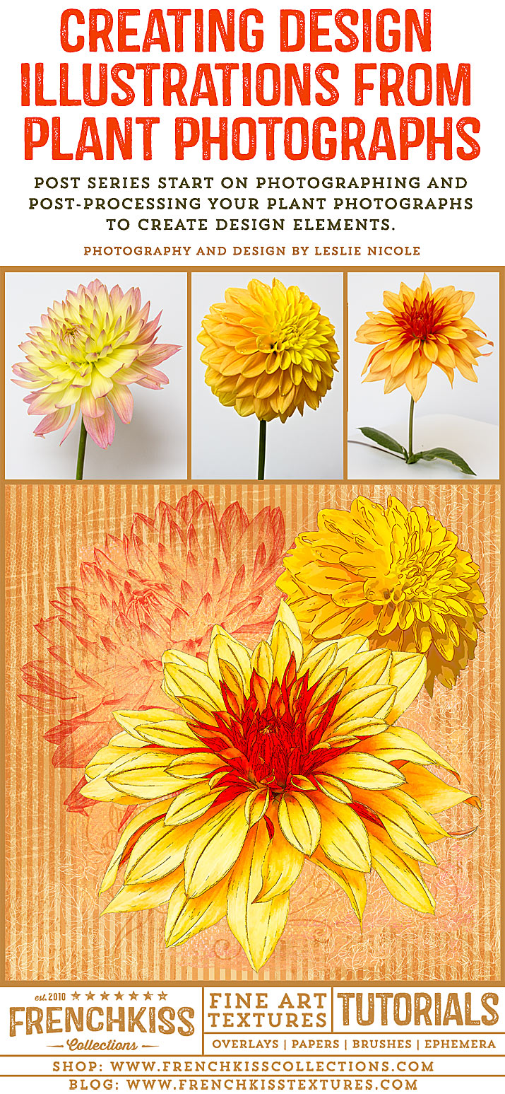 Creating design illustrations from your plant photographs.