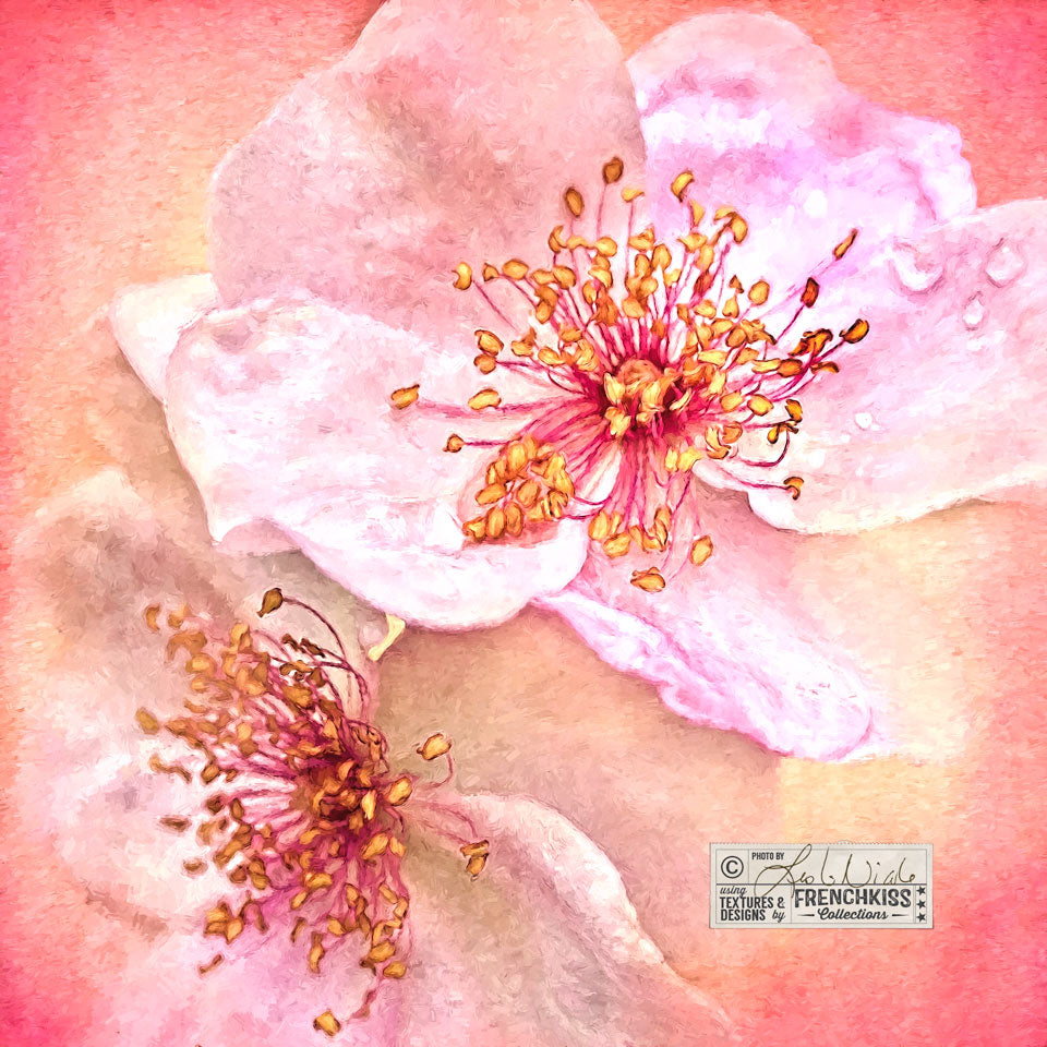 Rose Impression photograph using a watercolor texture and Topaz Labs Impression.