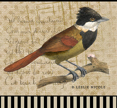Design using a vintage bird image, Photoshop brushes and digital paper. Design by Leslie Nicole using French Kiss Collections.