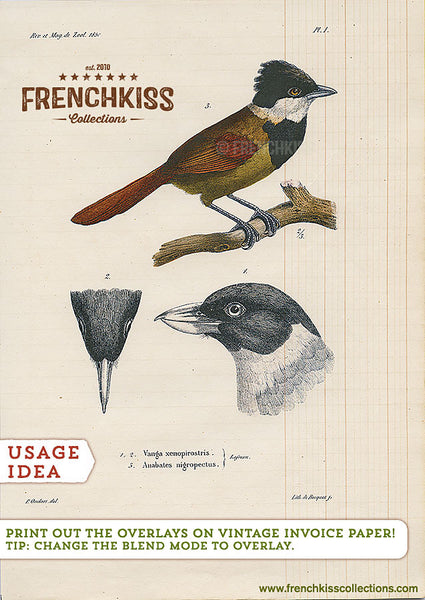 Usage example for 1850s digital vintage bird plate illustrations.
