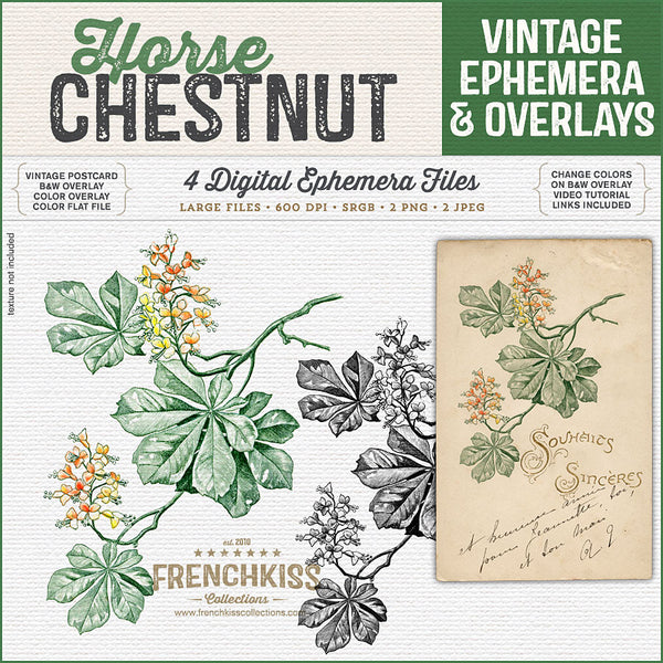 Vintage Horse Chestnut Postcard and Overlays