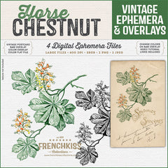 Digital overlays and a postcard of a lovely vintage illustration of a Horse Chestnut flowering branch