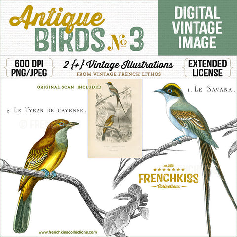 Gorgeous vintage illustration digital downloads of 2 birds from an antique French lithograph.
