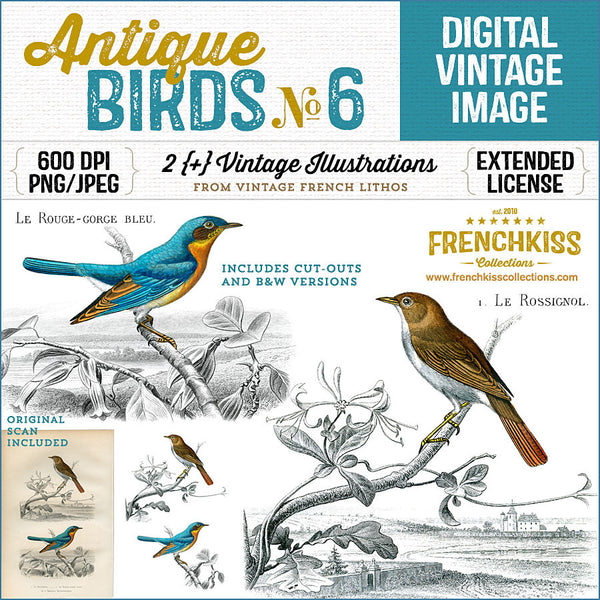 Lovely vintage illustration digital downloads of 2 birds from an antique French lithograph.